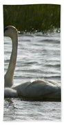Tundra Swan And Signets Beach Towel