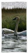 Tundra Swans And Cygents Beach Sheet