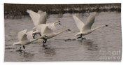 Tundra Swans Take Off Beach Towel