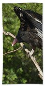 Turkey Vulture Beach Towel