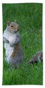 Turning Squirrel Beach Towel