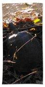 Turtle At Deer Creek Beach Towel