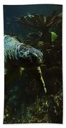 Turtle Crawl Beach Towel