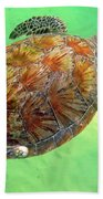 Turtle Day In Titusville,florida Beach Towel