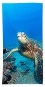 Turtle Portrait Beach Towel