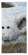 Turtle Smile  Beach Towel