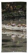 Turtles Sunning On A Log Beach Towel
