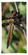 Twelve Spotted Skimmer Dragonfly Beach Towel