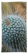 Twin Spined Cactus Beach Towel