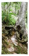 Twisted Tree Smoky Mountains Beach Towel