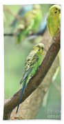 Two Beautiful Yellow Parakeets In A Tree Beach Towel