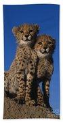 Two Cheetah Cubs Beach Towel