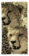 Two Cheetahs Beach Towel