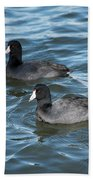Two Coots Beach Towel