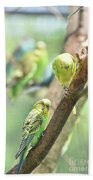 Two Cute Little Parakeets In A Tree Beach Towel