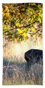 Two Deer In Autumn Meadow Beach Towel