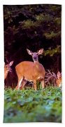 Two Doe And One Buck Beach Towel