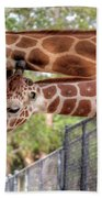 Two Giraffes Beach Towel