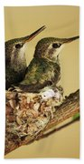 Two Hummingbird Babies In A Nest Beach Towel