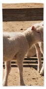 Two Little Lambs. Beach Towel