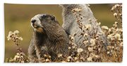 Two Marmots Beach Towel