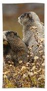 Two Marmots Beach Towel