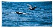 Two Pelicans Flying Beach Towel
