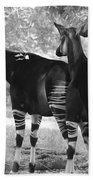 Two Stipers In Black And White Beach Towel