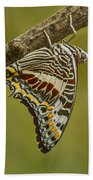 Two Tailed Pasha Butterfly Beach Towel