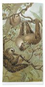 Two-toed Sloth Beach Towel