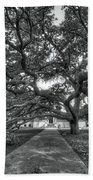 Under The Century Tree - Black And White Beach Towel