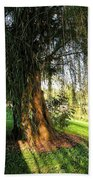 Under The Weeping Willow Beach Towel
