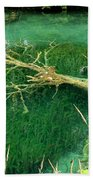 Underwater Tree Beach Towel