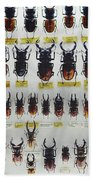 Unusual Pattern Made Out Of Many Stag Beetles Of Different Sizes Beach Towel