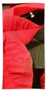 Up Close And Personal Poinsettia  Beach Towel