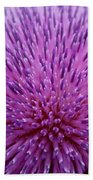 Up Close On Musk Thistle Bloom Beach Towel