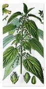 Urtica Dioica, Often Called Common Nettle Or Stinging Nettle Beach Towel