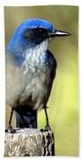 Utah Bird Beach Towel