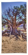 Utah Juniper On The Climb To Delicate Arch Arches National Park Beach Towel