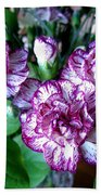 Variegated Carnations Beach Towel