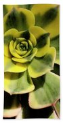 Variegated Succulent Beach Towel