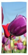 Velvet Red And Purple Tulip Flowers Closeup Beach Towel