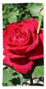 Velvet Red Rose Beach Towel