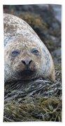 Very Chubby Harbor Seal Beach Towel