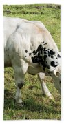 Very Muscled Cow In Green Field Beach Towel