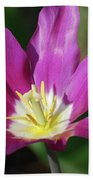 Very Pretty Dark Pink Blooming Tulip With Yellow In The Center Beach Towel