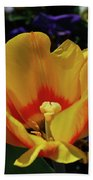 Very Pretty Flowering Yellow Tulip With A Red Center Beach Towel