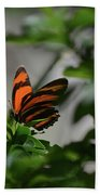 Vibrant Colors To A Orange Oak Tiger Butterfly Beach Towel