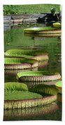 Victoria Amazonica Giant Lily Pads  Beach Towel