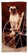 Victorian Boy With Pug Dog And Tricycle Circa 1900 Beach Towel